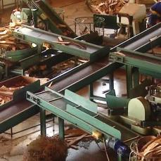 corcho de extremadura venta www.corchoextremadura.wordpress.com (10)